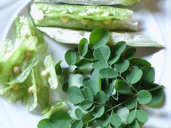 Moringa Leaves or malunggay