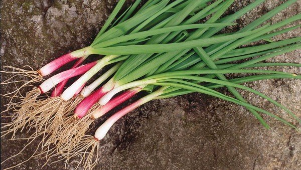 How to DIY Endless Supply Green Onions aka Scallions